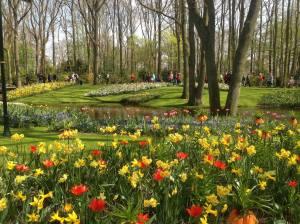tulips_deism